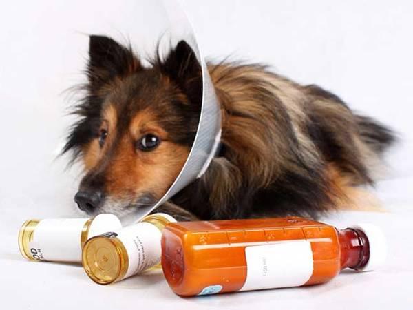 assurance chien categorie 1