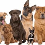 Comparateur assurance chien ou meilleur assurance pour chien