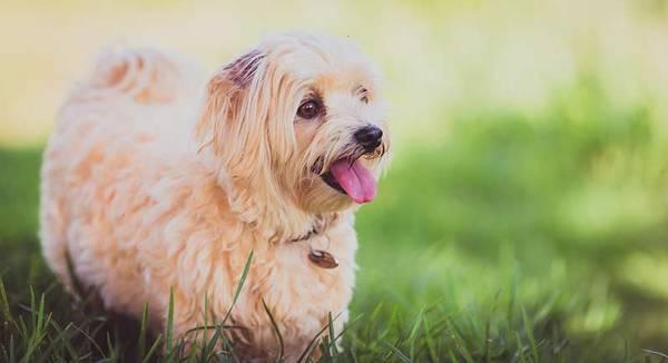 assurance chien prix