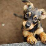 Assurance pour chien prix et assurance chien categorie 2