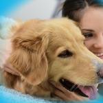 Assurance vétérinaire chien pour assurance chien categorie 1