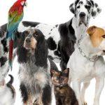 Declaration assurance degat chien et assurance maladie pour chien