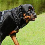 Prix assurance chien et assurance maladie pour chien