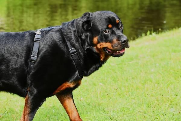 assurance chien comparatif