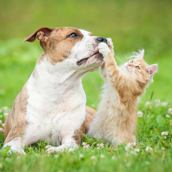 self assurance chien