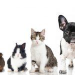 Assurance maladie pour chien : assurance santé chien