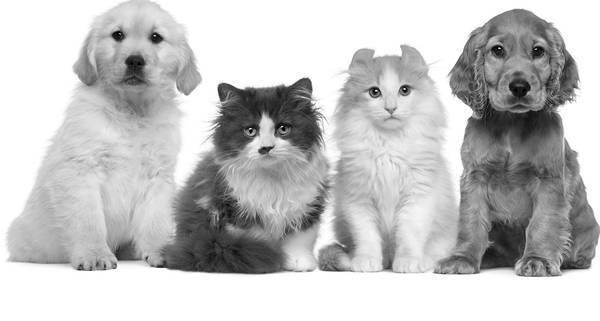 declaration assurance degat chien