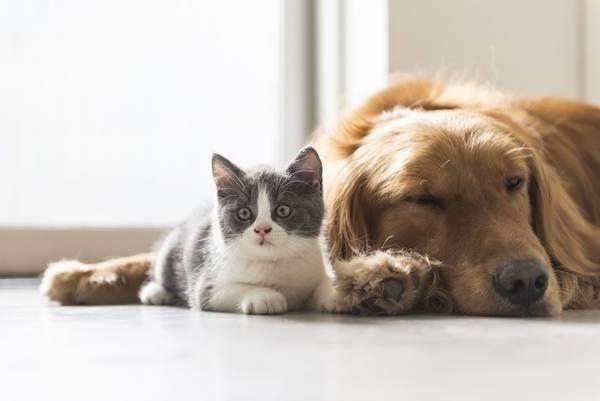 comparatif assurance chien