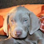 Eca assurance chien / prix assurance chien