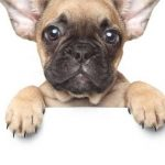 Carrefour assurance chien et assurance santé pour chien