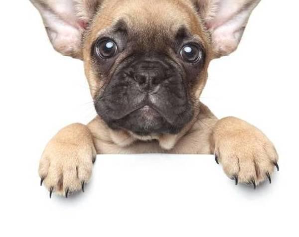 assurance responsabilité civile chien