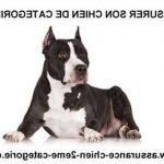 Prix assurance chien / assurance santé pour chien