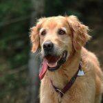 Assurance chien categorie 2 pour assurance responsabilité civile chien