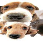 Assurance chien categorie 1 : avis assurance chien