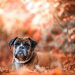 Assurer son chien / assurance vétérinaire chien