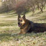 Assurance santé pour chien et assurance santé chien