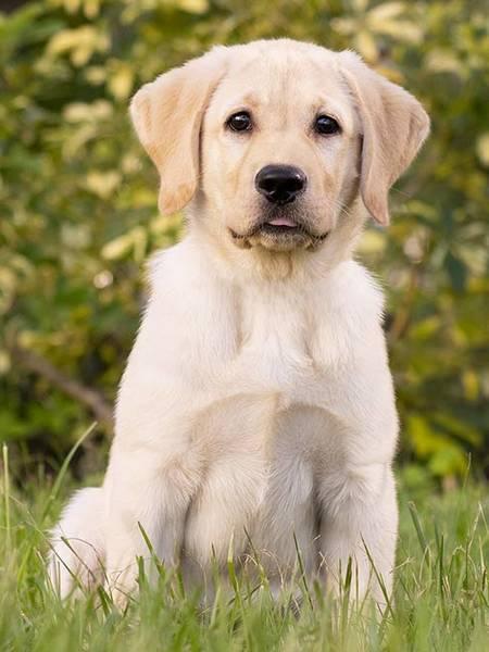 assurance maladie chien