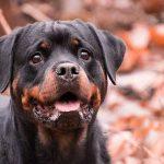 Assurance santé chien pour assurance chien categorie 2