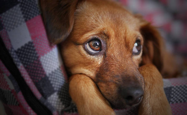 assurance chien de chasse