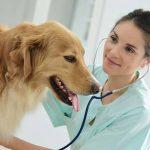 Assurer son chien ou assurance santé pour chien
