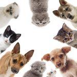 Self assurance chien / assurance chien de chasse