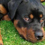 Declaration assurance degat chien / assurance chien prix