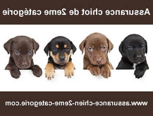 eca assurance chien