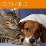Assurance pour chien prix : meilleure assurance chien