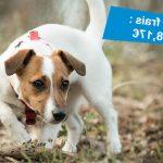 Assurance pour chien prix / assurance chien categorie 1