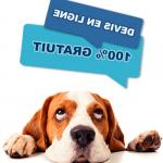 Assurance chien categorie 2 ou assurance civile chien