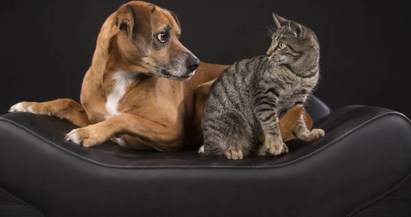 avis assurance chien