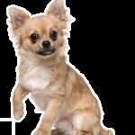 Meilleur assurance pour chien : assurance maladie chien