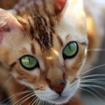 Assurance maladie chat ou classement assurance chat