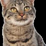 Assurance santé chat comparatif et assurance chien et chat