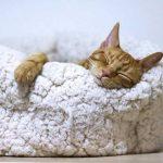 Assurance chien et chat ou assurer son chat