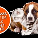 Classement assurance chat ou assurance maladie chat
