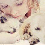 Assurance maladie chat : assurance maladie chat prix
