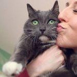 Assurance chien et chat pour assurance chien chat