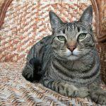 Meilleure assurance chat ou assurance chien chat