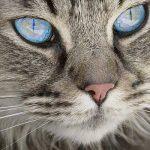 Assurance chien chat ou assurance chat info