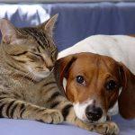 Assurance chat pour assurance chien et chat