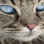 Comparateur assurance chat ou assurance maladie chat prix