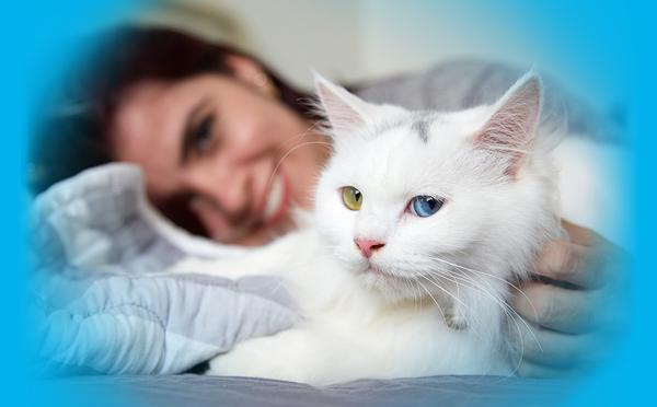 assurance pour chat