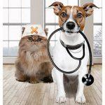 Assurance maladie chat prix et assurer son chat