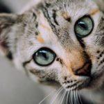 Assurance pour chat : assurance chat pas cher