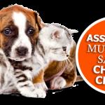 Assurance chat prix ou assurance chien et chat