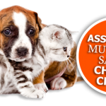 Classement assurance chat ou assurance chat