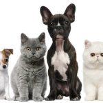 Comparateur assurance chat pour assurance maladie chat prix