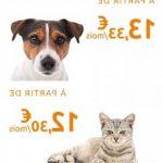 Meilleure assurance chat : assurance chat pas cher