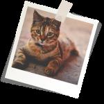 Assurance chat pas cher et assurance chien et chat